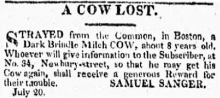 Second missing cow